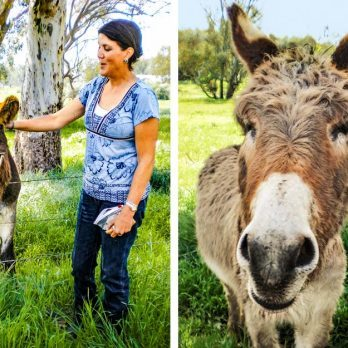 This Woman Made It Her Life's Mission to Rescue Donkeys
