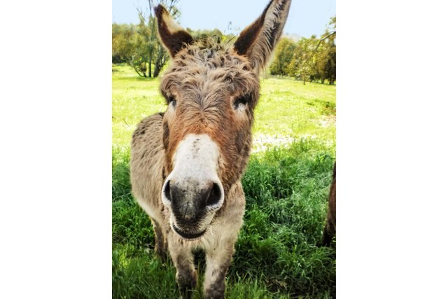 This-Woman-Made-It-Her-Mission-to-Rescue-Donkeys