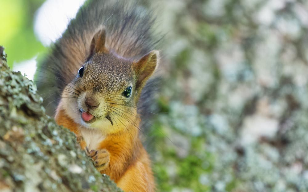 Funny Squirrel Photos You Need To See Readers Digest Readers - Cat squirrel playing cutest thing youll see day
