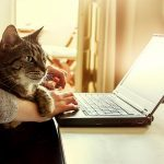 Here's Why Your Cat Is So Obsessed with Your Keyboard