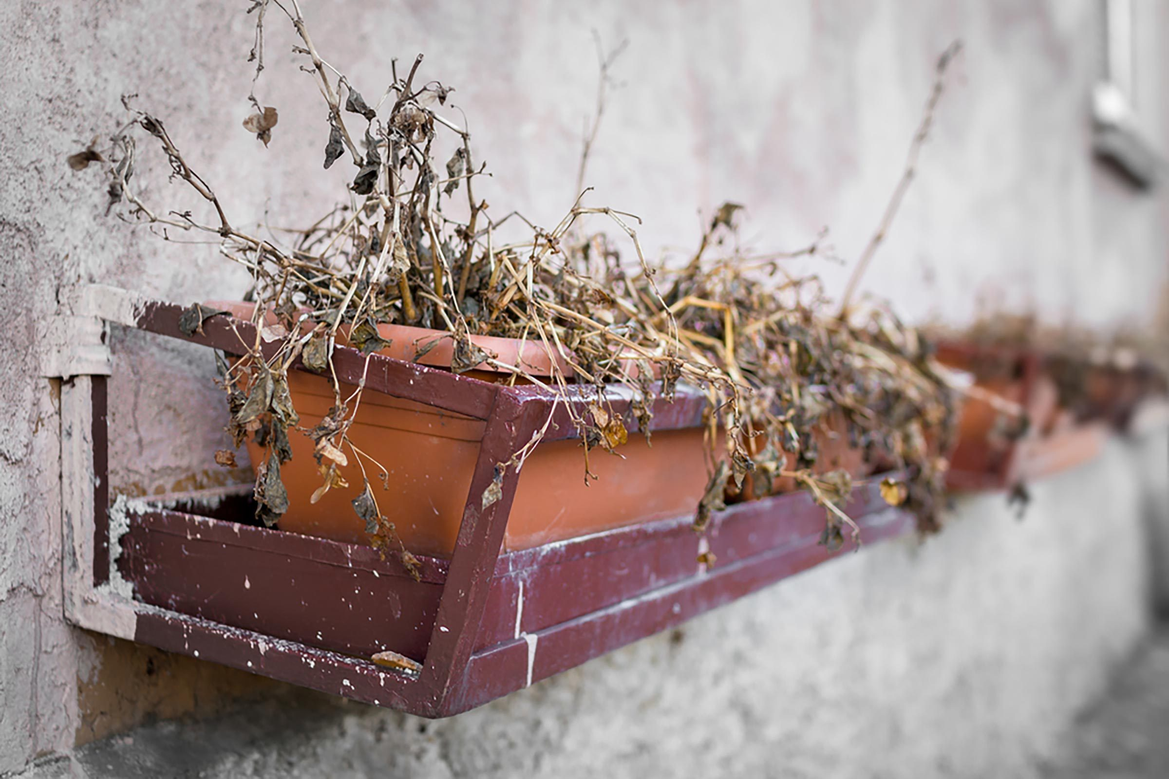 How to Revive a Dead Plant | Reader's Digest