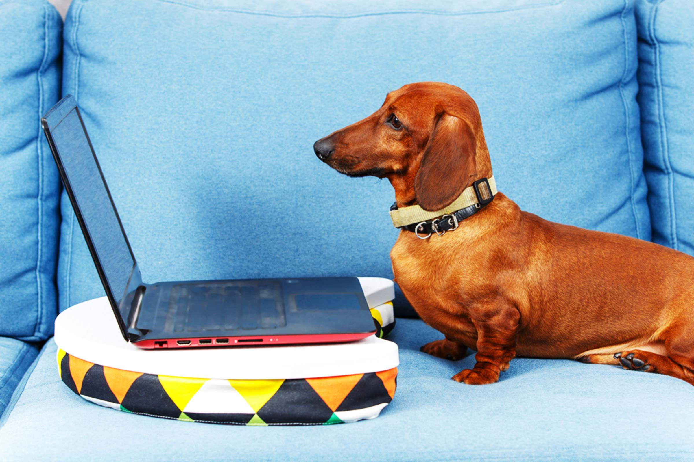 Ways to Keep Your Pet Busy While You're at Work - Reader's Digest6 Smart Ways to Keep Your Pet Happy While You're at Work All Day - 웹
