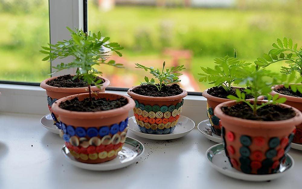 Smart Tricks To Revive A Dead Plant Reader S Digest