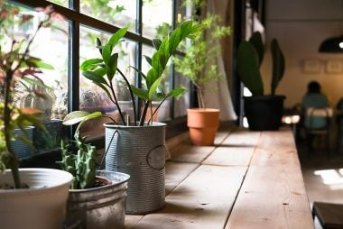 Smart Tricks to Revive a Dead Plant | Reader's Digest