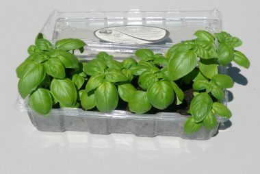 seedstarters