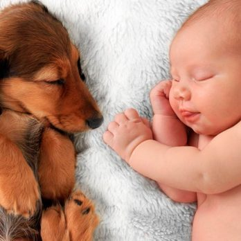 This One Thing Lowers Risk of Allergies and Obesity in Babies (Hint: It Barks)
