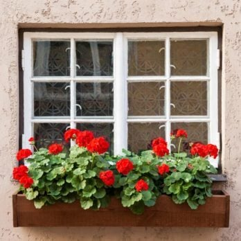 How to Grow Delicious Summer Veggies in Window Boxes