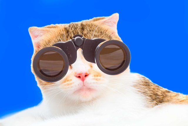 01-cats-with-better-jobs-than-you