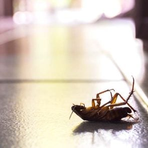 ways-to-never-see-a-bug-in-your-kitchen