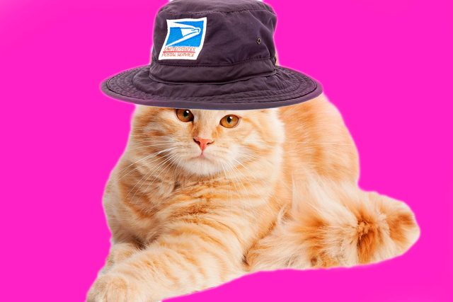 02-cats-with-better-jobs-than-you