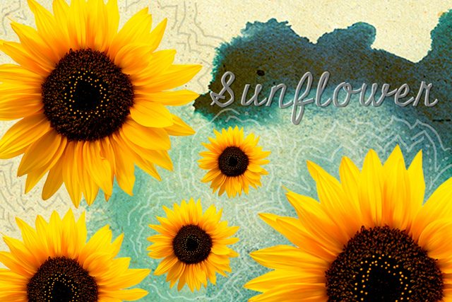 Seeds-to-Plant-in-May-for-Fabulous,-Easy-to-Grow-Flowers-All-Summer-Long