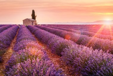 The Dreamiest Lavender Farms You Need to Visit at Least Once