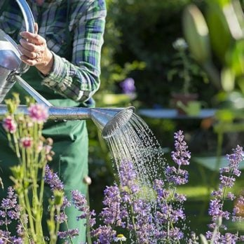 """9 Eco-Friendly Tips to Make Your Backyard Even """"Greener"""""""