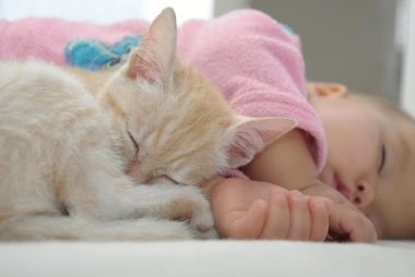 Why You Shouldn T Sleep With Your Cat Reader S Digest