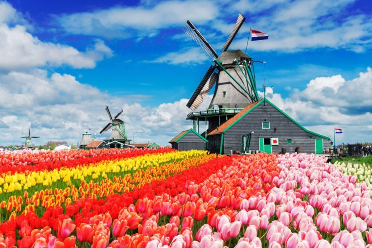 Pictures Of Tulip Farms That Will Make You Celebrate Spring Reader S Digest