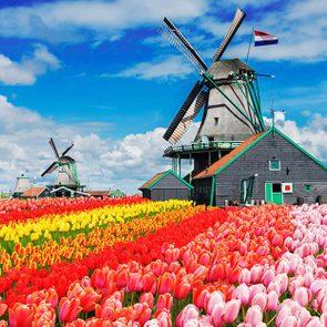 Tulip Farms