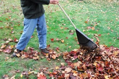 raking