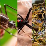 The 10 Most Dangerous Bugs to Watch Out for This Summer