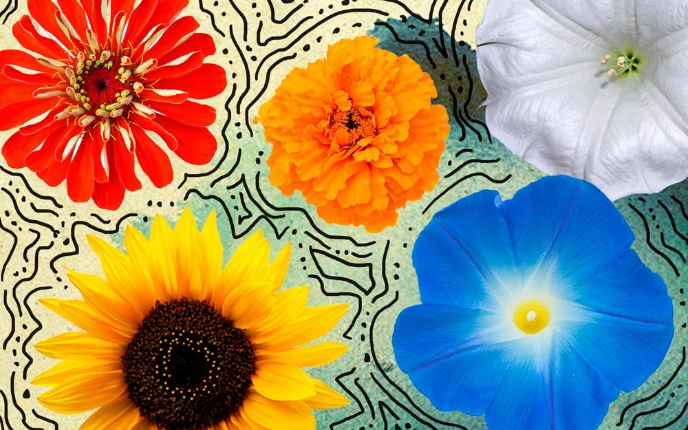 5 Seeds to Plant in May for Fabulous, Easy-to-Grow Flowers All Summer Long