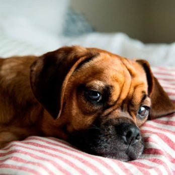 Should You Let Your Dog Sleep in Your Bed?
