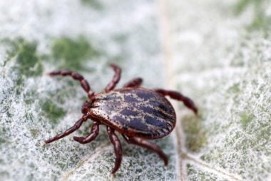 Heres how you can avoid a tick bite this summer readers digest some of the most common tick borne diseases in the united states include lyme disease babesiosis ehrlichiosis and rocky mountain spotted sciox Images
