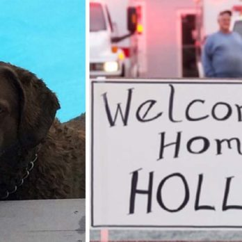 This Dog Miraculously Survived an Accident 1,400 Miles from Home—and Managed to Get Back