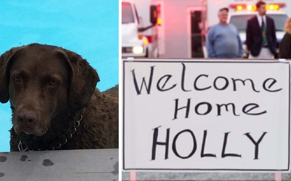 This-Dog-Miraculously-Survived-an-Accident-1,400-Miles-from-Home-Welcome-home