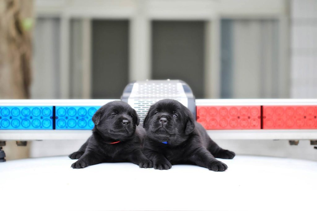 04-These-Photos-of-the-World's-Cutest-K-9-Team-Will-Make-You-Want-One,-Too