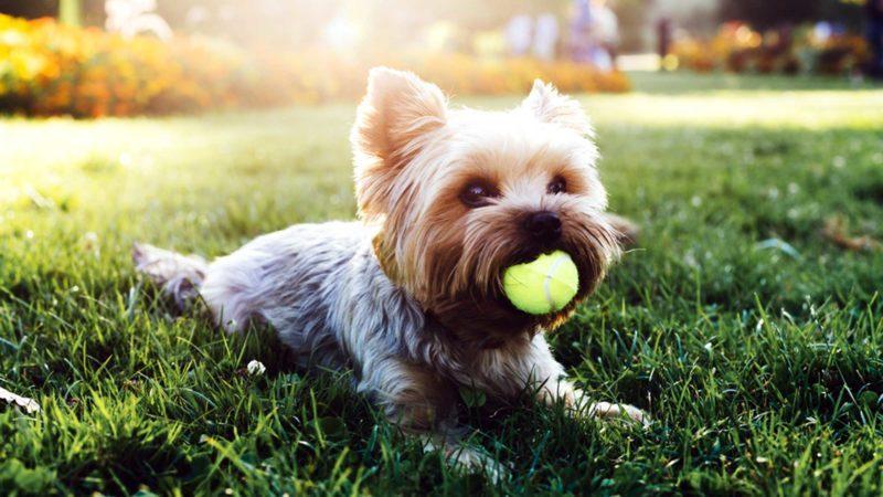 dog-breed