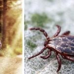 9 Foolproof Tricks to Avoid Tick-Borne Illnesses