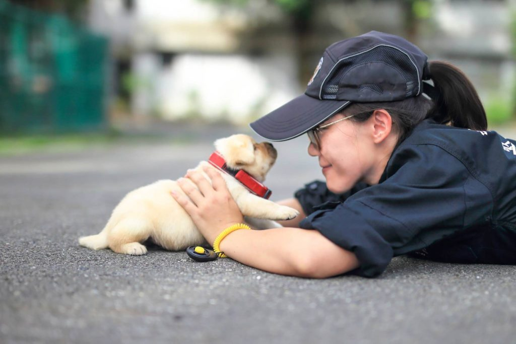 A Taiwan Police Department Just Recruited The Cutest Puppies Ever - The internet cant get enough of the taiwan police forces newest k9 recruits
