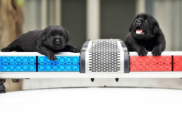 08-These-Photos-of-the-World's-Cutest-K-9-Team-Will-Make-You-Want-One,-Too