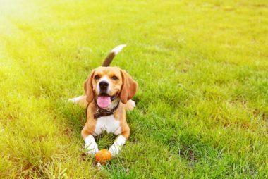 Can You Use Zinc Oxide On A Dog