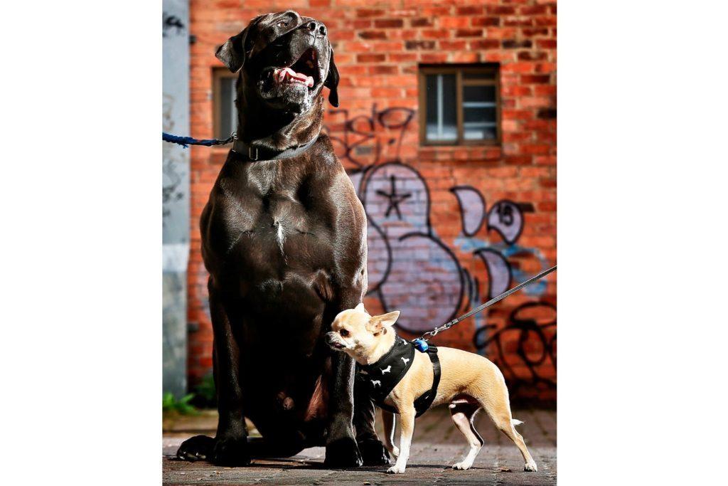 Barkly-Barks-Dog-Festival-8849034d-BlairNewspixREXShutterstock