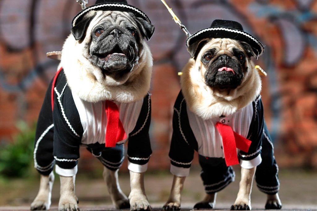 Barkly-Barks-Dog-Festival-8849034f-BlairNewspixREXShutterstock