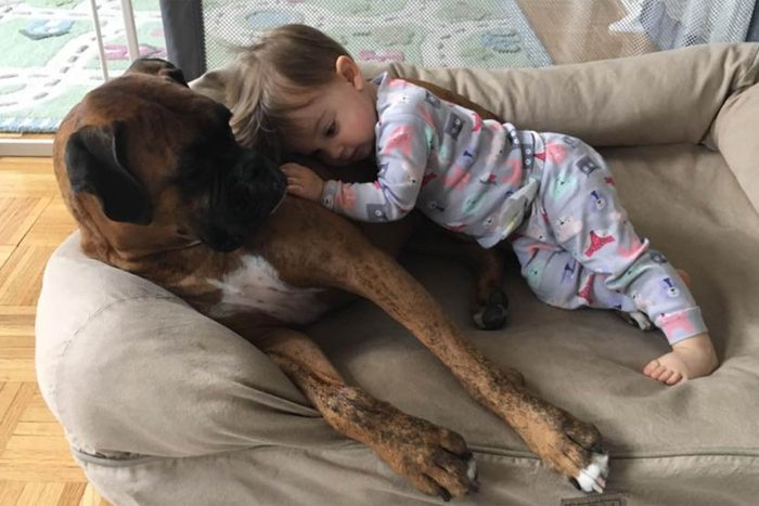 young child cuddles with a large dog in the dog bed