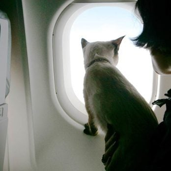 Meet the Well-Traveled Cats That Have Already Been to More Places Than You