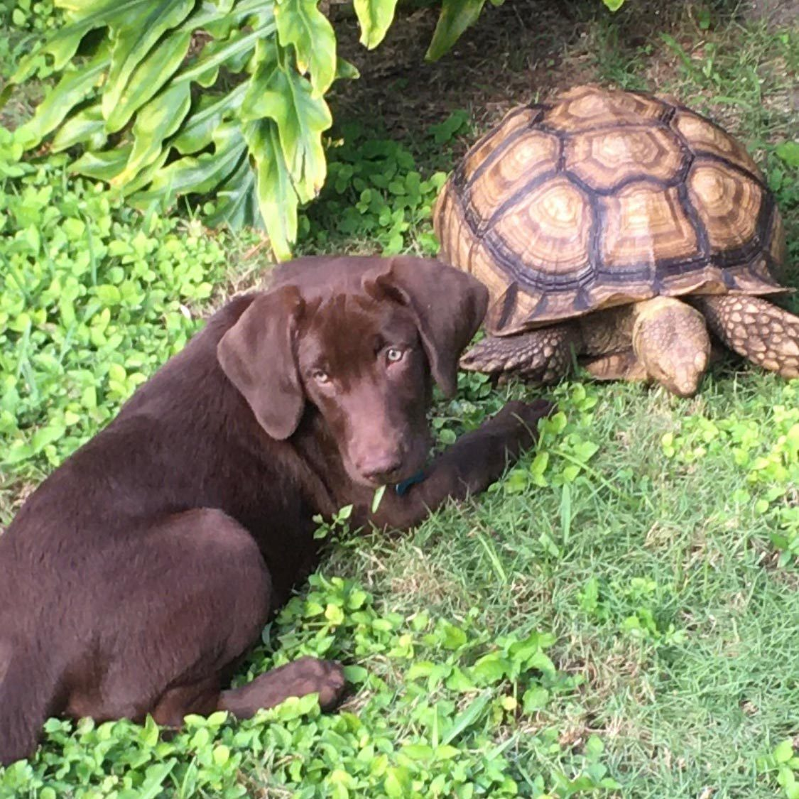 dog and turtle hang out together in the grass