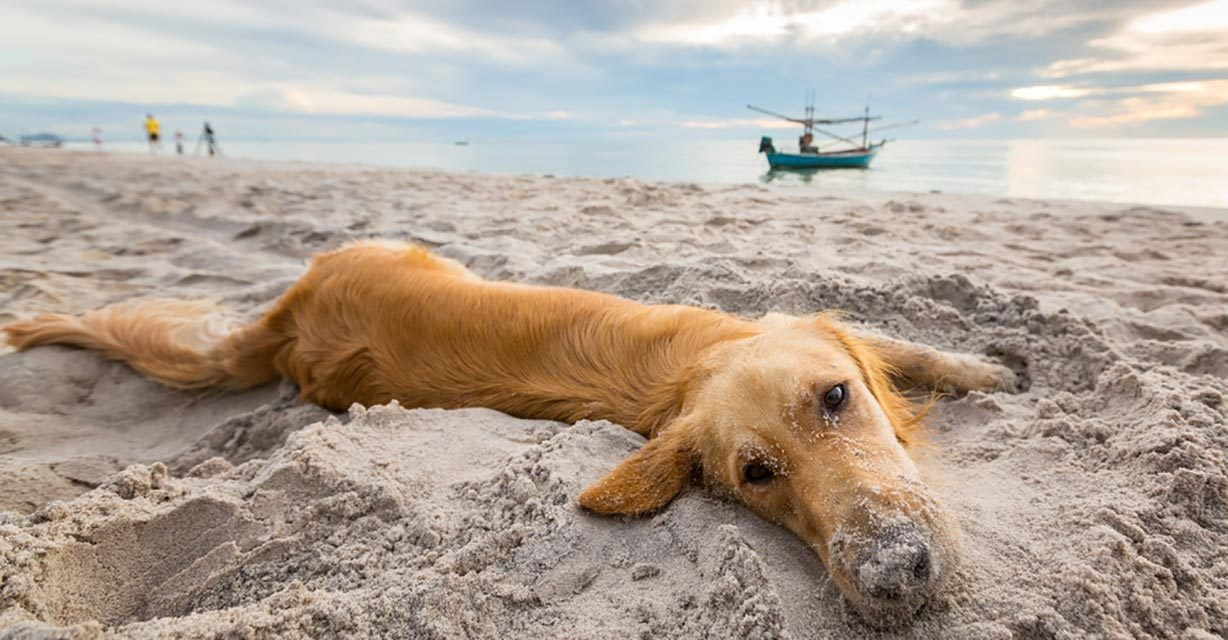 Dog-Friendly Beaches Your Pooch Will Love