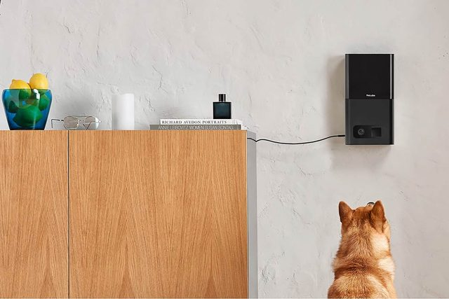 01-This-New-Gadget-Allows-You-to-See-and-Feed-Your-Pets-From-Work-via-petcube.com
