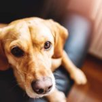 11 Symptoms of Dog Arthritis Every Pet Owner Should Know