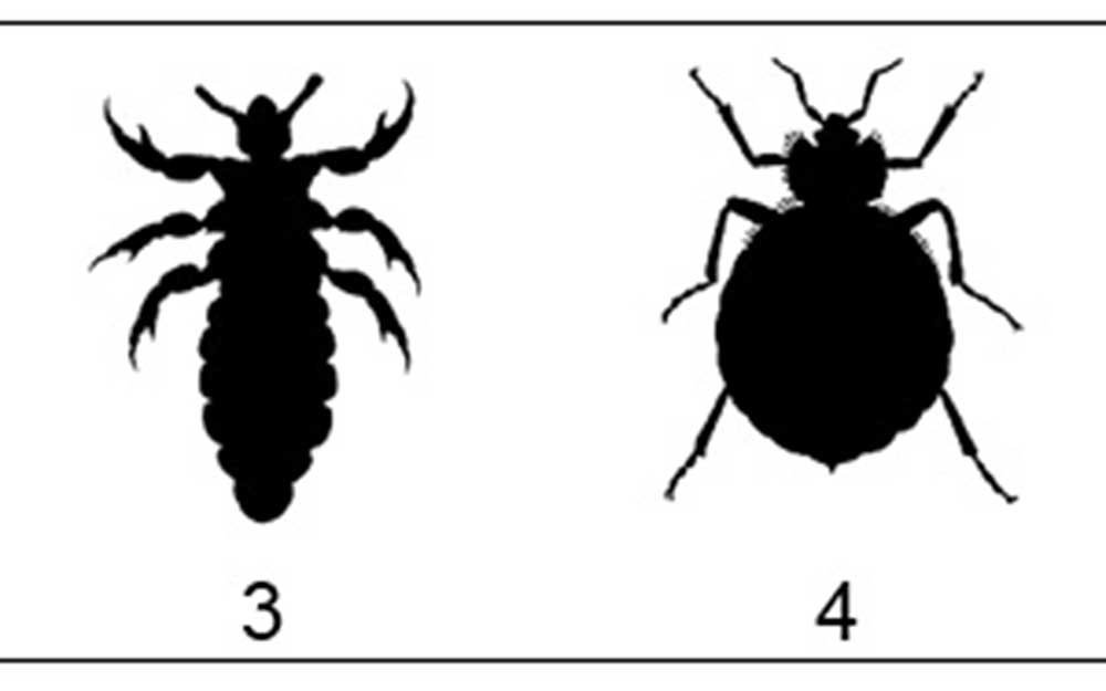 What Do Bed Bugs Look Like How To Check A Hotel Reader S Digest