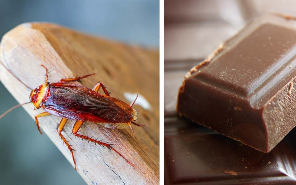 Yuck! Here's How Many Insects You're Eating Every Year | Reader's Digest