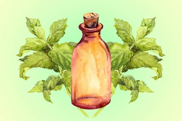 04-peppermint-Five-Essential-Oils-for-Allergies--Here's-What-You-Need-to-Know-Now-shutterstck