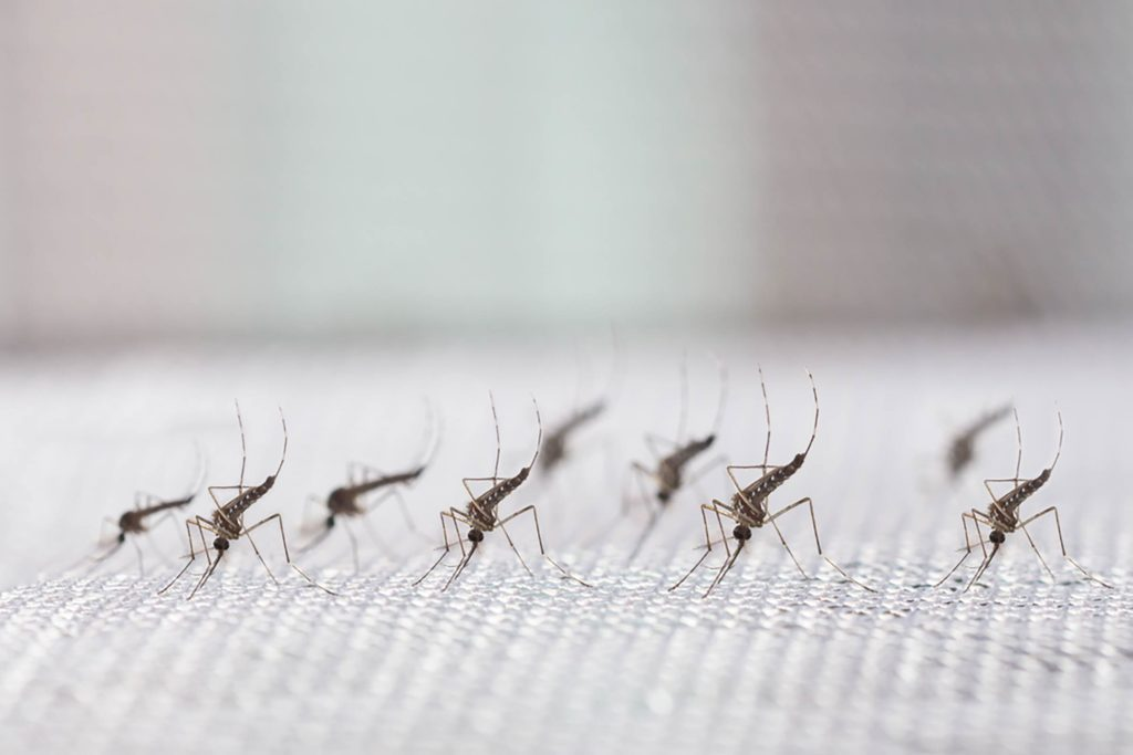 This--Company-Just-Released-20-Million-Mosquitoes-in-California-492084520-frank60