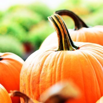 Here's What You Need to Know Before You Go Pumpkin Picking This Fall