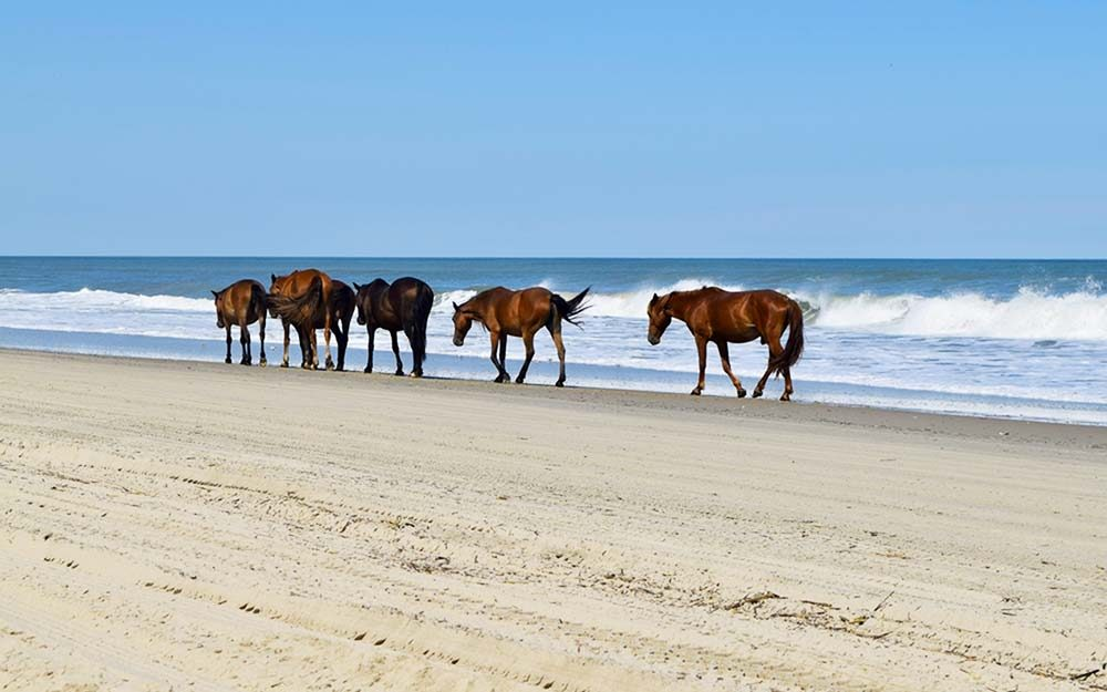 Wild Horses in North America: Where You Can Still See Them ...