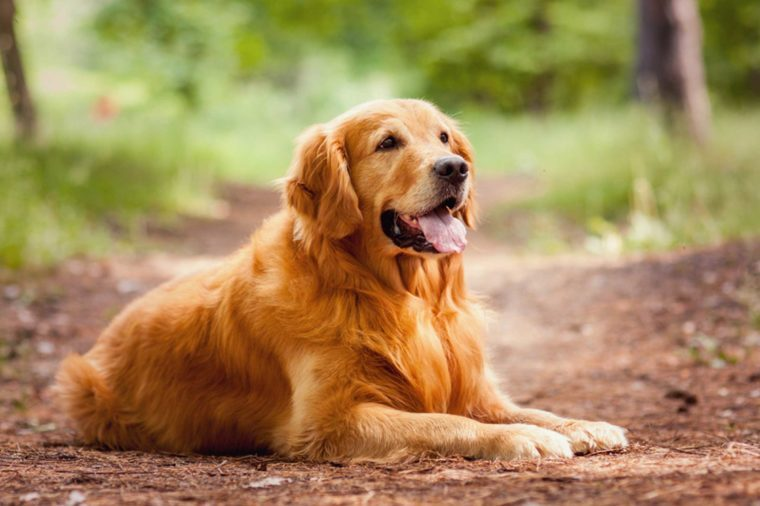 How To Pick The Best Dog Breed For You Reader S Digest