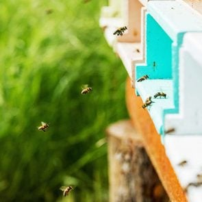 """<h4></noscript>Tips for Avoiding Insect Bites and Stings"""" width=""""295"""" height=""""295"""" /><h4>Tips for Avoiding Insect Bites and Stings</h4></a></div><p></p><div class="""