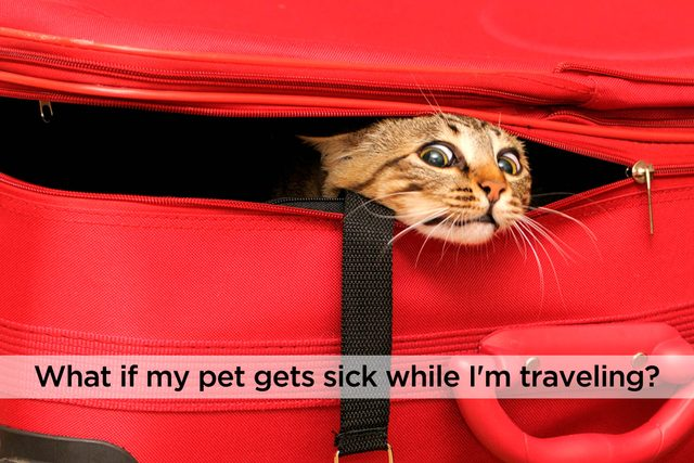 Questions-You-Need-to-Ask-Before-You-Sign-Up-for-Cat-or-Dog-Pet-Insurance